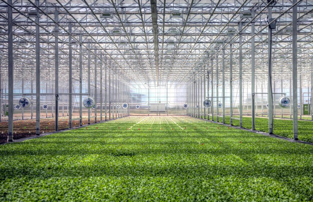 BrightFarms Hydroponic Greenhouse Farm in Chicago | Rochelle IL | BrightFarms CHI Greenhouse | Sunshine