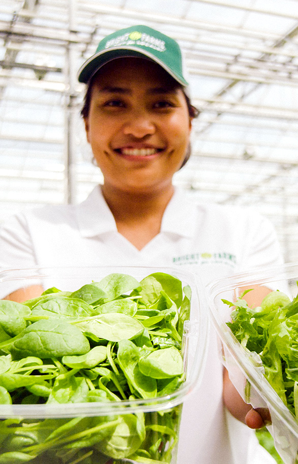 Fai Jakkreerat Chatkaew | Production Manager | Industrial Engineer | BrightFarms CHI Greenhouse | Rochelle Illinois | Baby Salad Greens