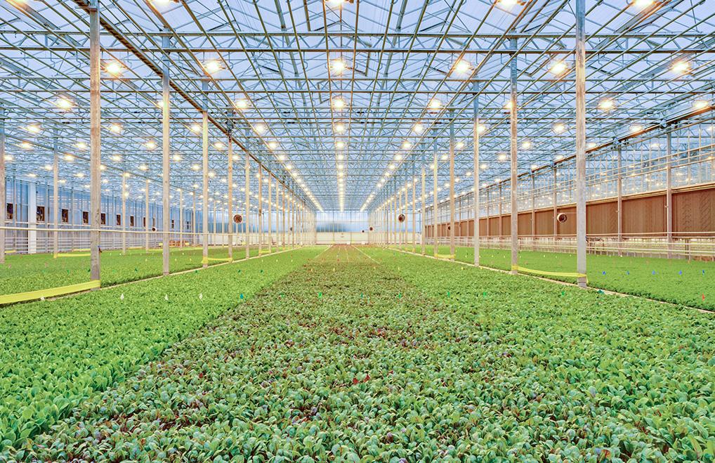 BrightFarms Hydroponic Farm in Wilmington Ohio | Greenhouse | Grow Lights | Baby Greens | CEA | Grown Indoors