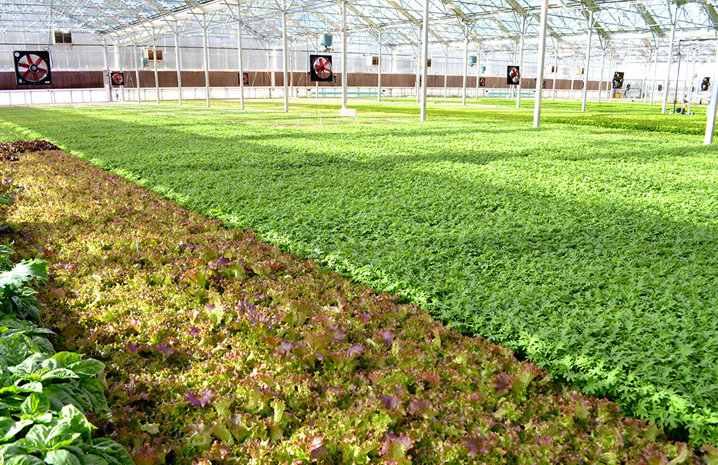 BrightFarms Hydroponic Greenhouse Farm in Yardley, PA | LMT | CEA | Grown Indoors