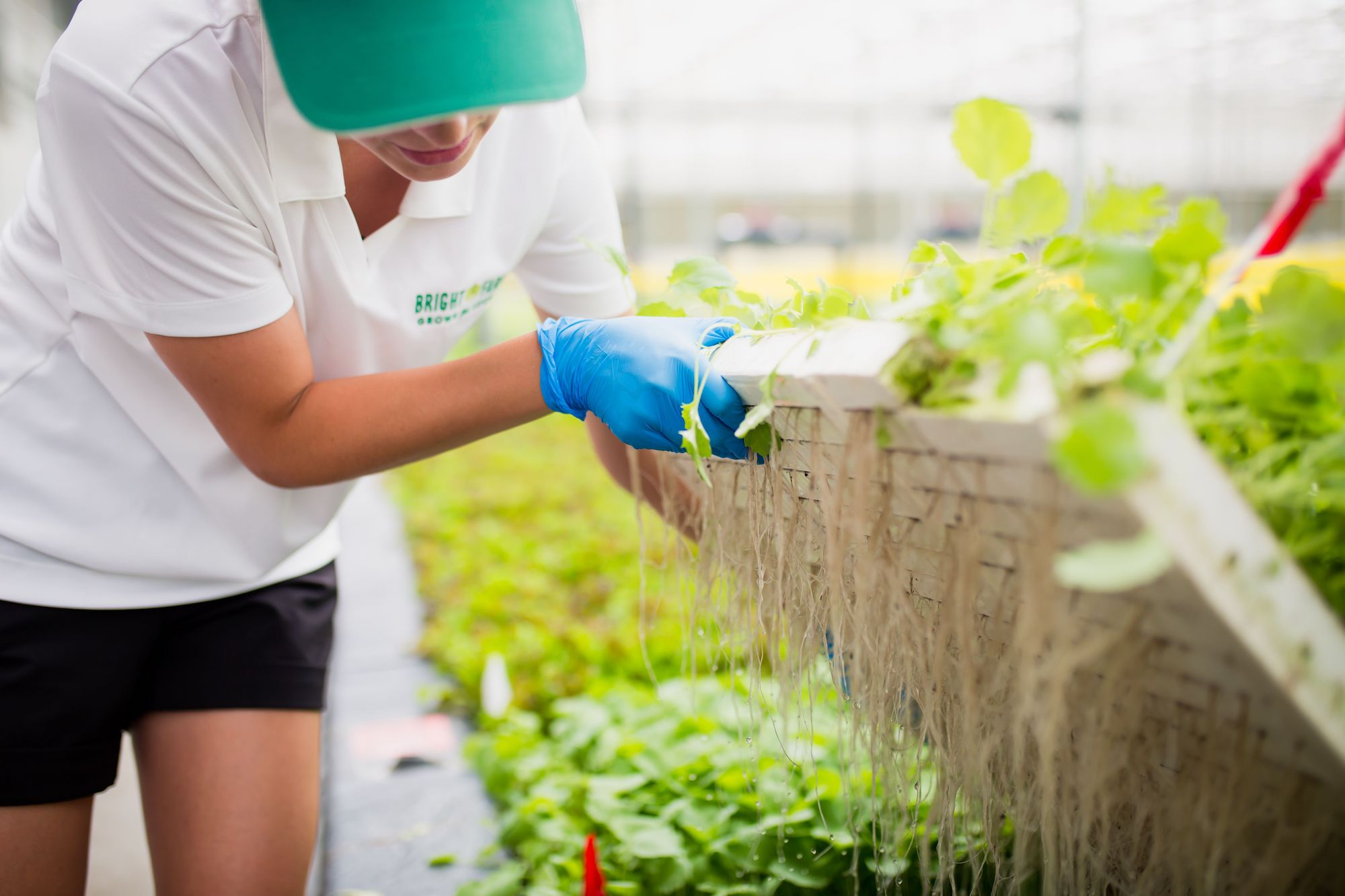 Denise DeRue | Head Grower | Farmer Working Checking Crops and Roots in Hydroponic Greenhouse | Lettuce | CEA | Grown Indoors