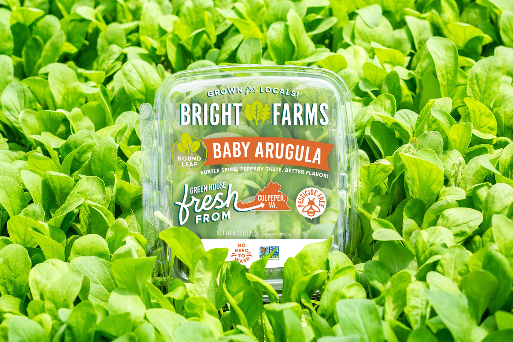 BrightFarms Arugula in Hydroponic Greenhouse Field
